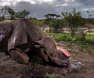 Brent Stirton/Wildlife Photographer of the Year 2017