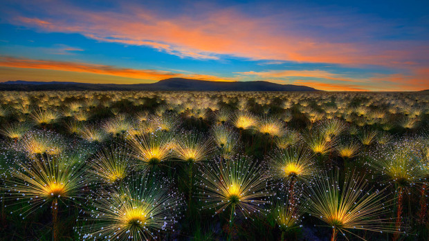 Marcio Cabral/International Garden Photographer of the Year